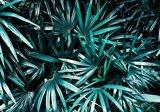 Palmblad behang