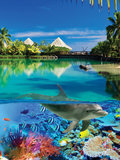 Onderwater fotobehang Dolfijn