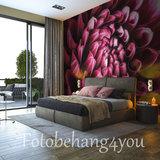 Bloemen fotobehang Chrysant
