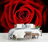 Rode Roos behang