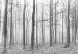 Bos fotobehang zwart-wit