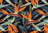 Strelitzia behang Donker