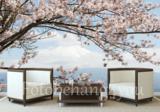 Kersenbloesem behang berg Fuji