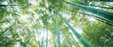 bamboe poster behang