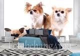 Chihuahua behang