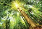 Boomkroon fotobehang zonlicht