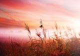 Gras Avondzon fotobehang