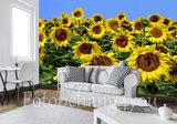 zonnebloemen behang