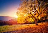 Boom in de herfst behang