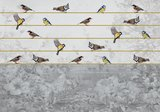 Birds on a string fotobehang