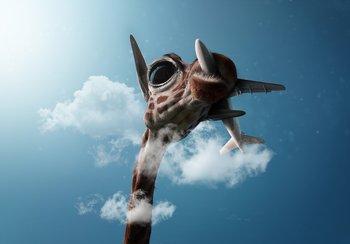 Giraffe fotobehang vliegtuig