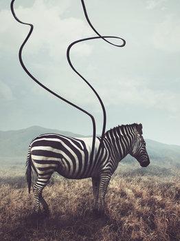 Zebra fotobehang streepje los