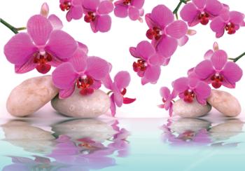 Orchideeën met witte stenen fotobehang