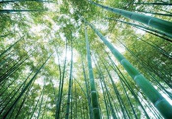 Bamboebos fotobehang