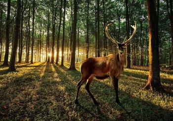 Edelhert in bos fotobehang 2