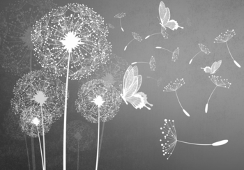 Dandelion grijs fotobehang