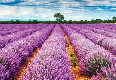 Lavendelveld fotobehang Provence