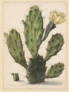 Bloeiende Vijgcactus fotobehang Saftleven