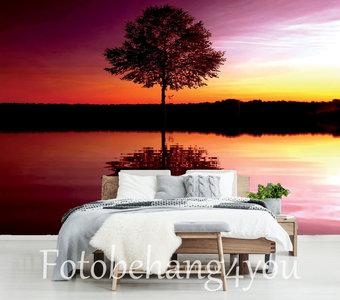 Boom bij zonsondergang fotobehang