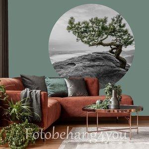Behang cirkel Boom op rots