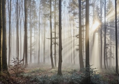 Bos behang Zonnestralen in de mist
