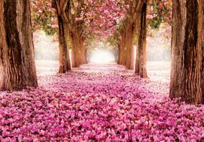 Bloesembomen fotobehang roze