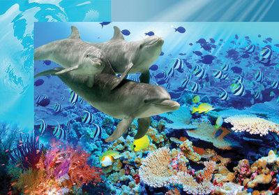 Dolfijnen fotobehang koraal