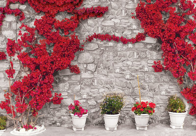 stenen muur fotobehang bougainville