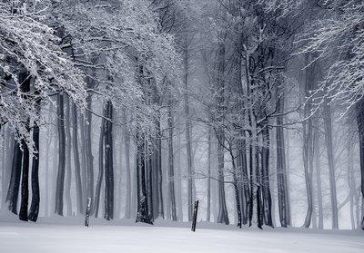 winters Bos fotobehang