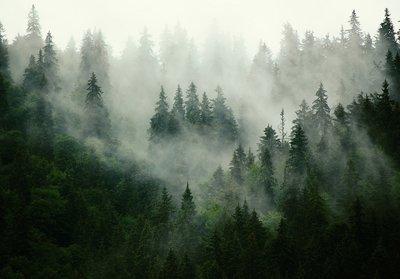 Misty Forest fotobehang