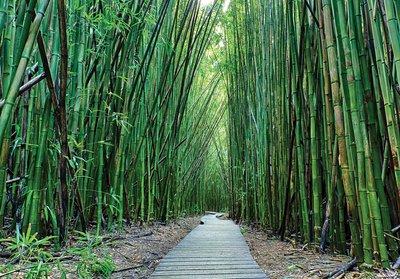 Bamboebos fotobehang Looppad